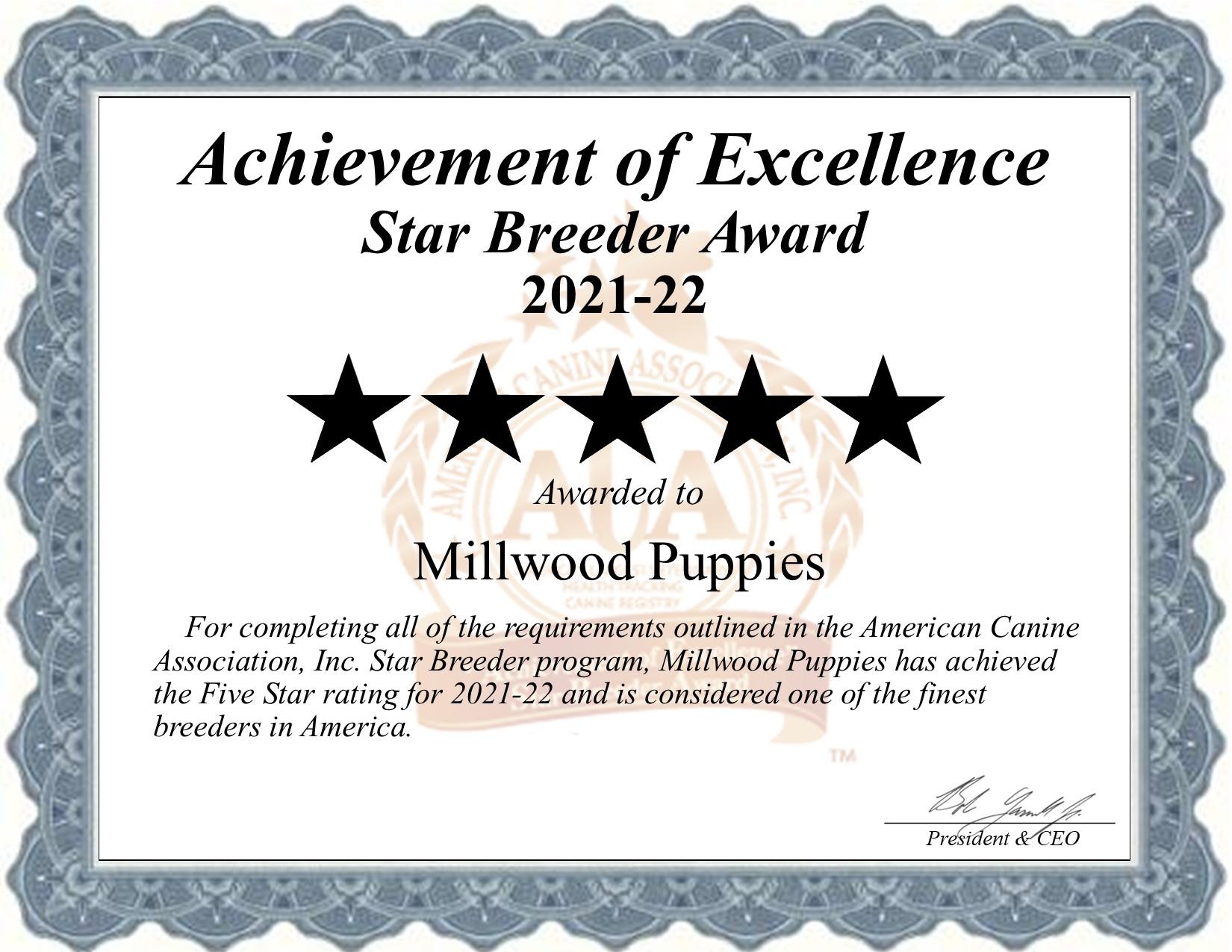 Millwood, Puppies, dog, breeder, star, certificate, Millwood-Puppies, Gap, PA, Pennsylvania, puppy, dog, kennels, mill, puppymill, usda, 5-star, aca, ica, registered, Bernadoodle, 17353